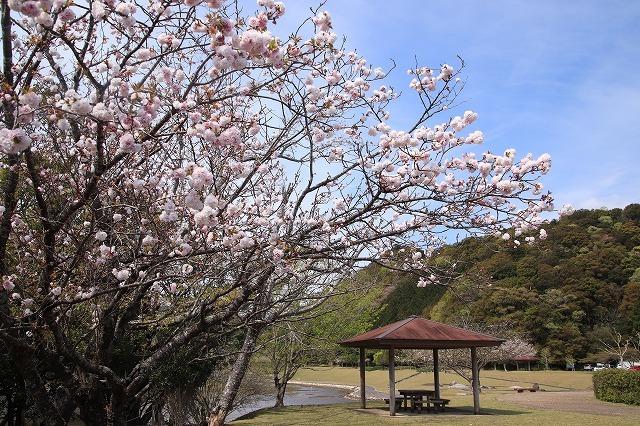 大白公園一周散歩(その1)(撮影:4月11日)_e0321325_19284107.jpg