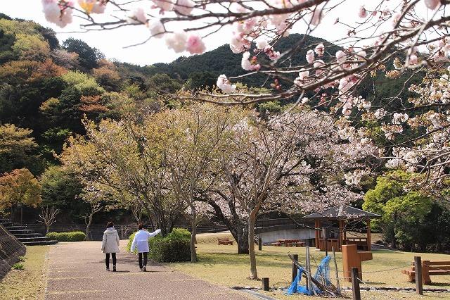 大白公園一周散歩(その2)(撮影:4月11日)_e0321325_19435884.jpg