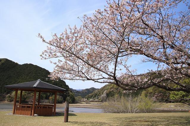 大白公園一周散歩(その2)(撮影:4月11日)_e0321325_19443617.jpg