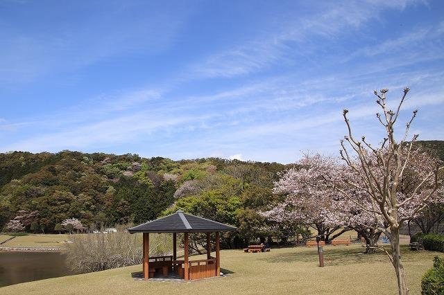 大白公園一周散歩(その2)(撮影:4月11日)_e0321325_19445318.jpg