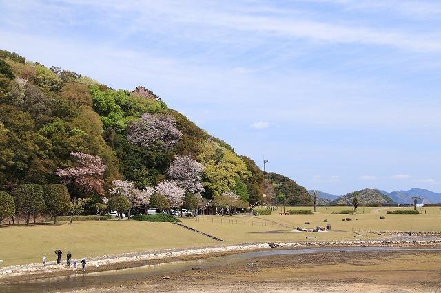 大白公園一周散歩(その2)(撮影:4月11日)_e0321325_19450575.jpg