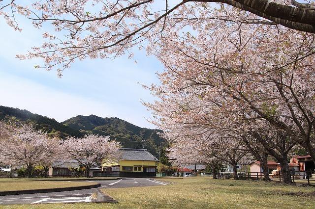大白公園一周散歩(その2)(撮影:4月11日)_e0321325_19454235.jpg