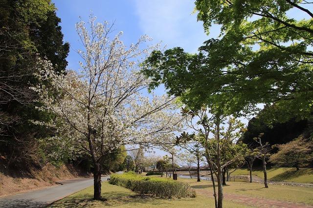 大白公園一周散歩(その2)(撮影:4月11日)_e0321325_19461954.jpg