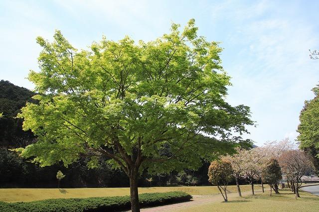 大白公園一周散歩(その2)(撮影:4月11日)_e0321325_19463034.jpg