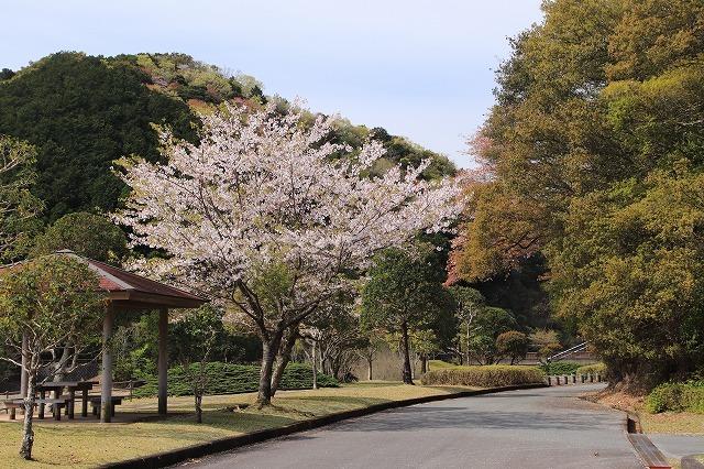 大白公園一周散歩(その2)(撮影:4月11日)_e0321325_19465666.jpg