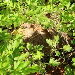 ブラックビートの花穂 ヒナの巣立ち_d0336530_20335036.jpg