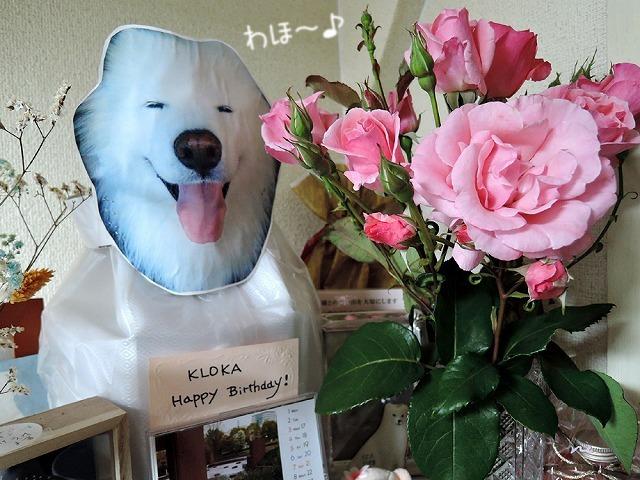薔薇が咲いた♪_c0062832_15235408.jpg