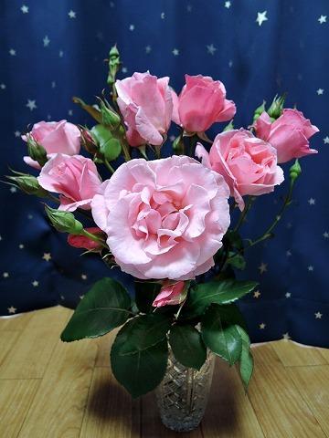 薔薇が咲いた♪_c0062832_15235453.jpg