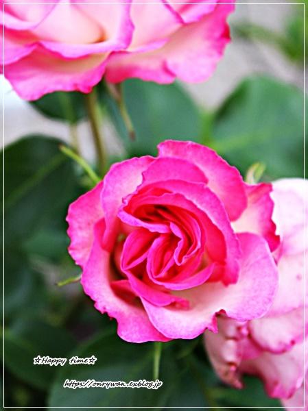 竹輪の磯辺揚げ弁当と庭からストロベリーアイス♪_f0348032_17505992.jpg