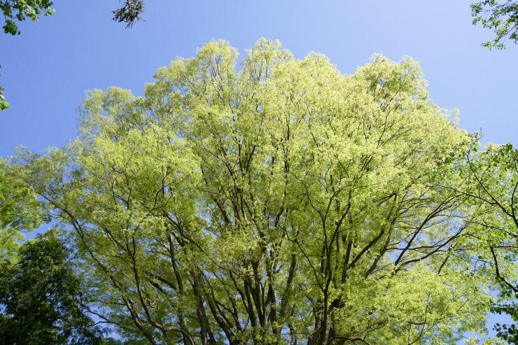 tree(3cut)_e0342136_18514134.jpg