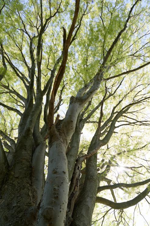 tree(3cut)_e0342136_18520738.jpg