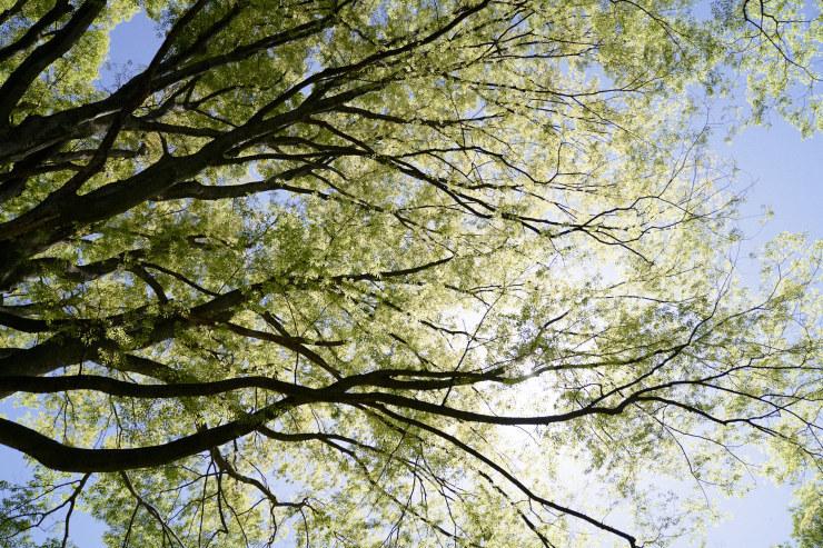 tree(3cut)_e0342136_18531875.jpg