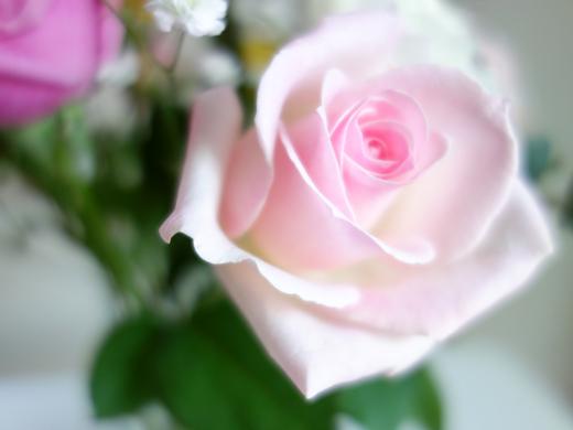 赤薔薇★白薔薇★薔薇薔薇_a0383340_21224632.jpg