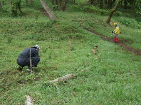 初夏を彩るヤマアジサイ周辺を下刈り5・21_c0014967_06460964.jpg