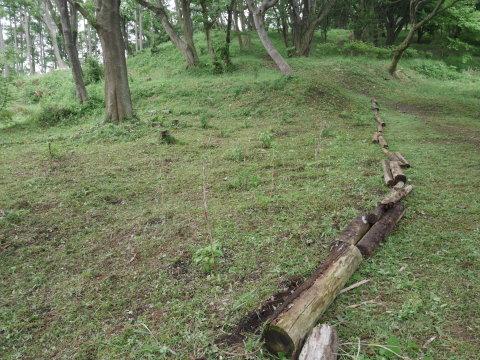初夏を彩るヤマアジサイ周辺を下刈り5・21_c0014967_06492838.jpg