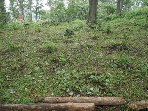 初夏を彩るヤマアジサイ周辺を下刈り5・21_c0014967_06494927.jpg