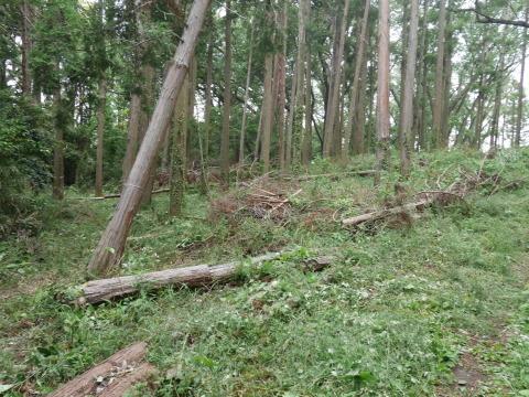 初夏を彩るヤマアジサイ周辺を下刈り5・21_c0014967_06504402.jpg