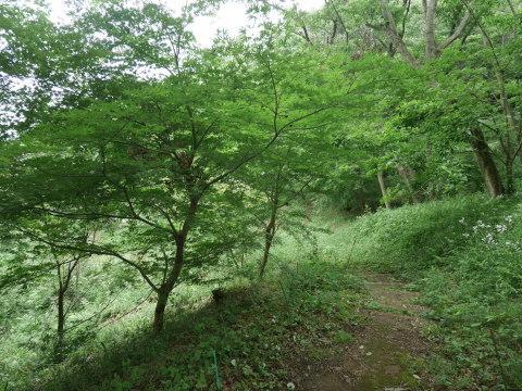 初夏を彩るヤマアジサイ周辺を下刈り5・21_c0014967_06522261.jpg