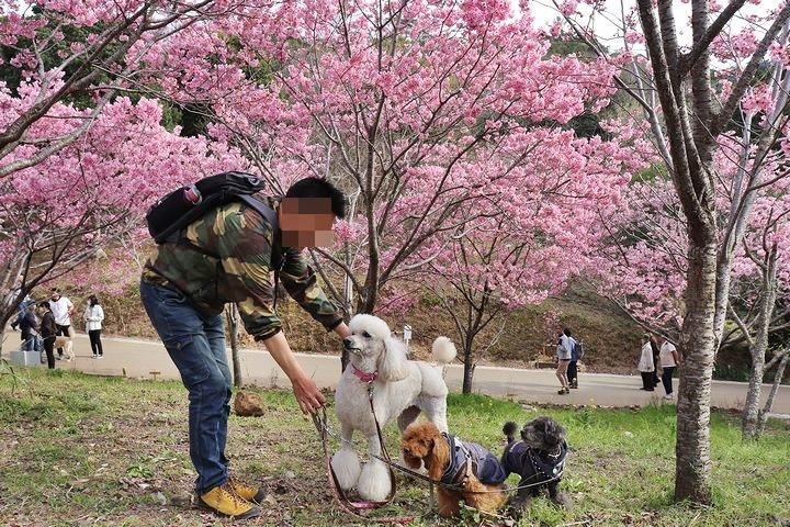 満開の陽光桜と。【誕生日旅行4】_b0111376_15363793.jpg