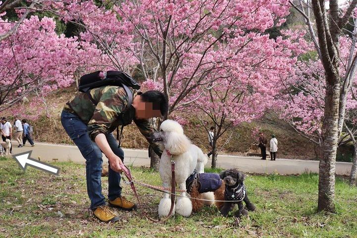 満開の陽光桜と。【誕生日旅行4】_b0111376_15375250.jpg