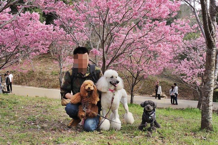 満開の陽光桜と。【誕生日旅行4】_b0111376_15404147.jpg