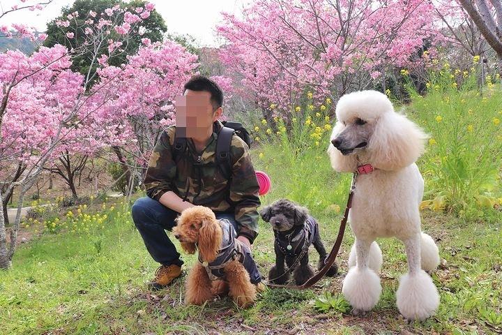 満開の陽光桜と。【誕生日旅行4】_b0111376_15422844.jpg