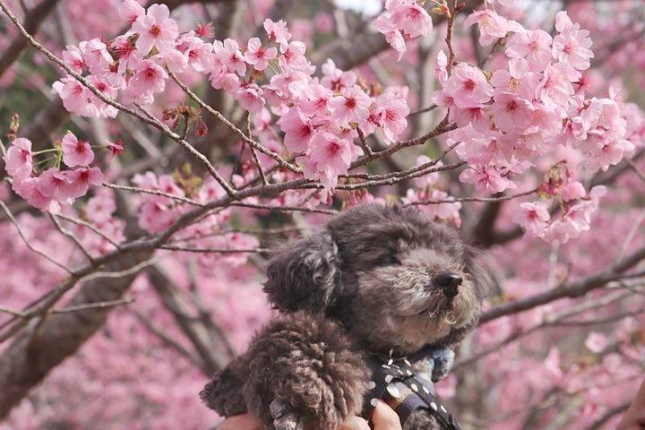 満開の陽光桜と。【誕生日旅行4】_b0111376_15424676.jpg