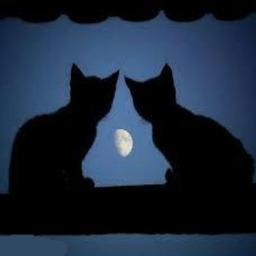 ネコ の 恋 居眠り半睡の とほほ な生活