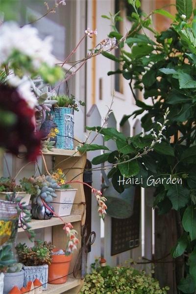 アルプス乙女と多肉のお花も可愛いヨ~(•ө•)♡_a0394182_19452637.jpg