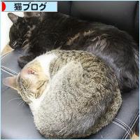 子猫同士は・・・_a0389088_05064635.jpg