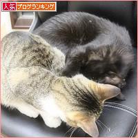 子猫同士は・・・_a0389088_05064677.jpg