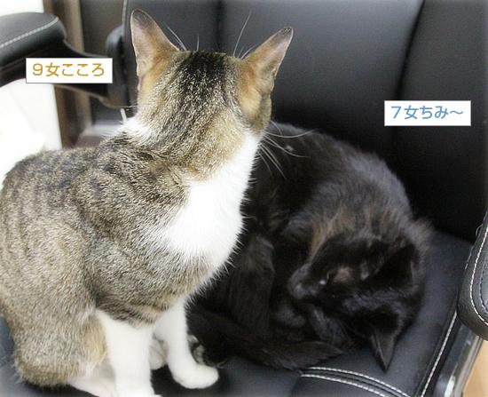 子猫同士は・・・_a0389088_05064739.jpg