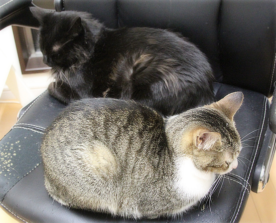 子猫同士は・・・_a0389088_05064751.jpg