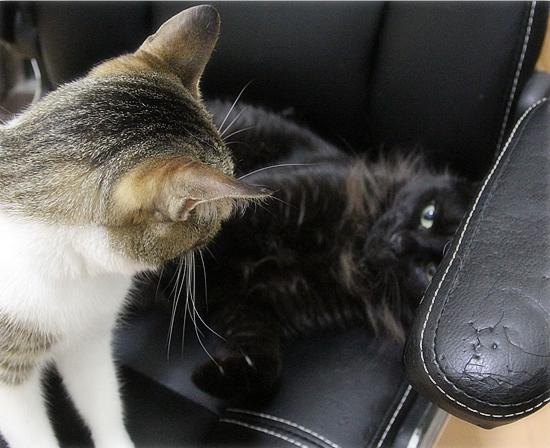 子猫同士は・・・_a0389088_05064757.jpg