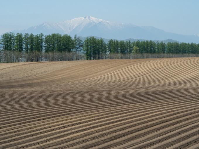 5月下旬は新緑の季節・・畑の畝模様が風景のアクセントに!_f0276498_18060208.jpg