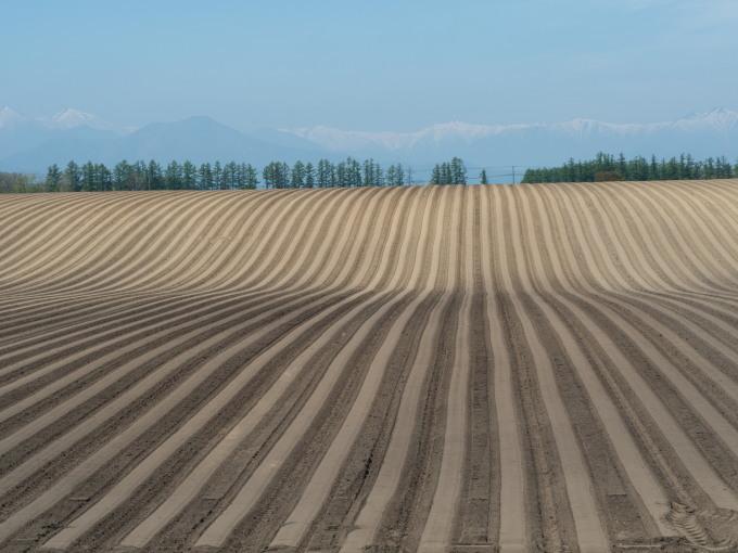 5月下旬は新緑の季節・・畑の畝模様が風景のアクセントに!_f0276498_18061580.jpg