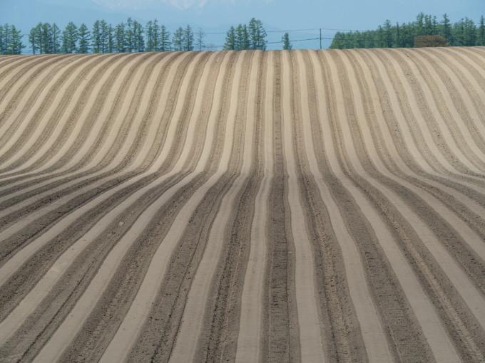 5月下旬は新緑の季節・・畑の畝模様が風景のアクセントに!_f0276498_18062532.jpg