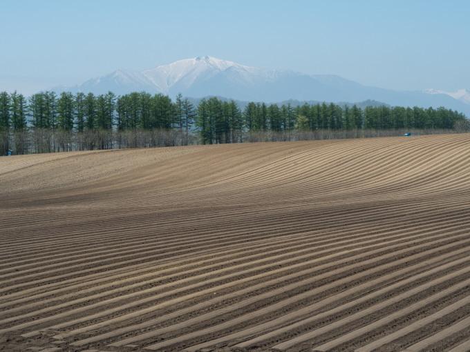 5月下旬は新緑の季節・・畑の畝模様が風景のアクセントに!_f0276498_18063956.jpg