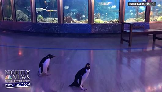 人恋しいのは水族館のお魚たちも、みんな同じ_b0007805_00223985.jpg
