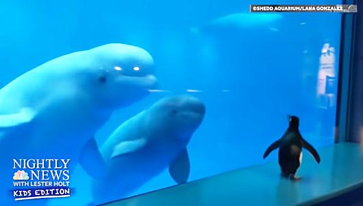 人恋しいのは水族館のお魚たちも、みんな同じ_b0007805_00300406.jpg