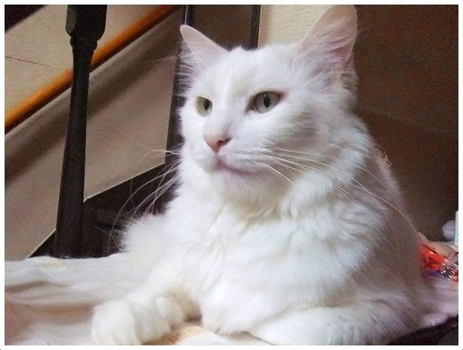 気をつけよう!猫の便秘_a0134114_13205968.jpg