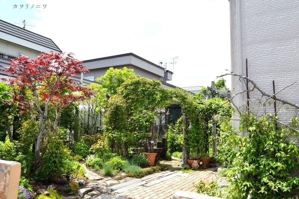 フローラリア咲く5月23日の庭_d0380314_20092112.jpg