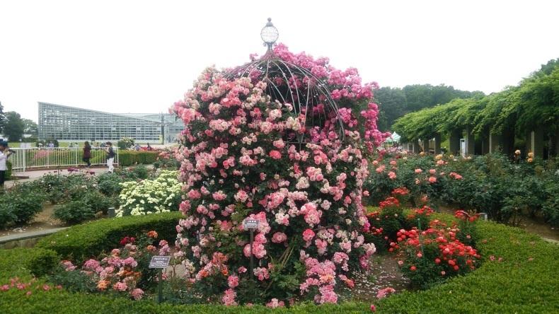 【神代植物公園 ばら園】2018年5月_c0398615_15540103.jpg