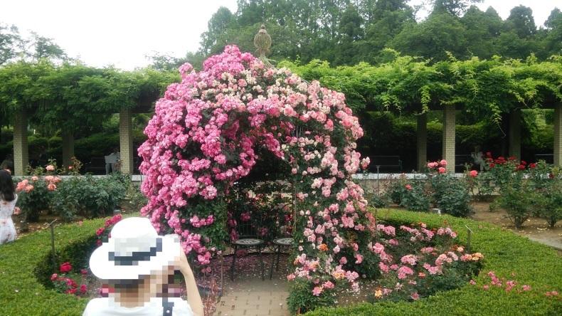 【神代植物公園 ばら園】2018年5月_c0398615_16350472.jpg