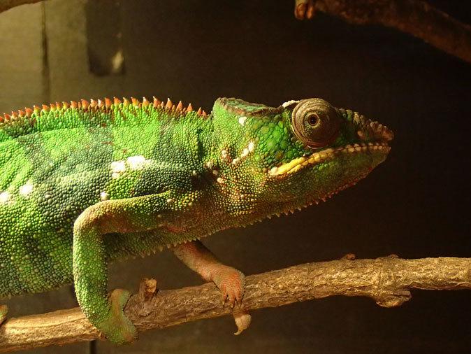 上野動物園: 両生爬虫類館特設展示 「ハラペコロジー~なにを食べる? どう食べる?」【前編】_b0355317_14050664.jpg