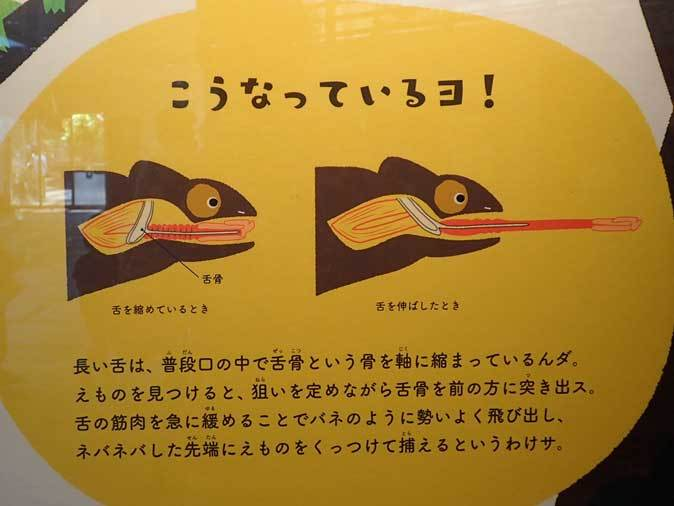 上野動物園: 両生爬虫類館特設展示 「ハラペコロジー~なにを食べる? どう食べる?」【前編】_b0355317_14061115.jpg