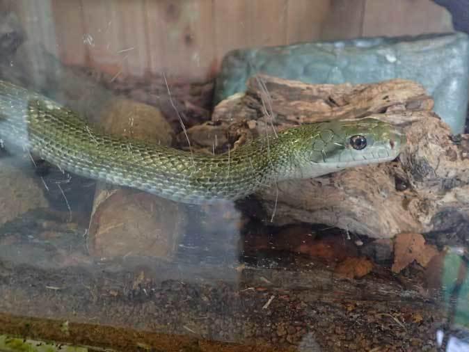 上野動物園: 両生爬虫類館特設展示 「ハラペコロジー~なにを食べる? どう食べる?」【前編】_b0355317_14220504.jpg