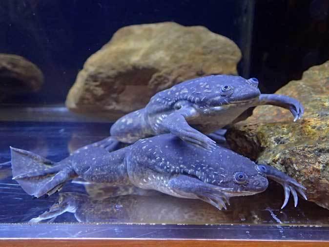 上野動物園: 両生爬虫類館特設展示 「ハラペコロジー~なにを食べる? どう食べる?」【後編】_b0355317_21475793.jpg