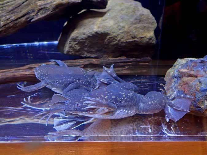 上野動物園: 両生爬虫類館特設展示 「ハラペコロジー~なにを食べる? どう食べる?」【後編】_b0355317_21491988.jpg