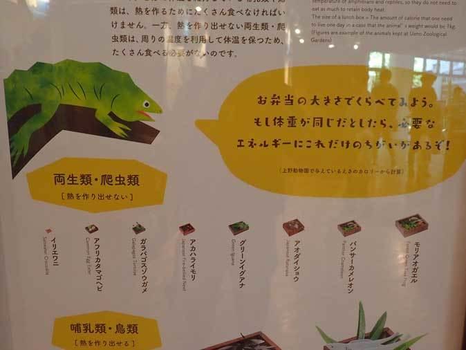 上野動物園: 両生爬虫類館特設展示 「ハラペコロジー~なにを食べる? どう食べる?」【後編】_b0355317_22224005.jpg